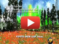 Poppys Snow LOOP 54sec