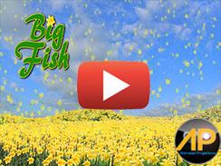 Bit Fish
